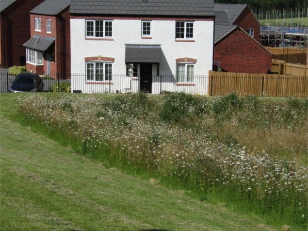 John Chambers Wildflower Matting supplied for Balancing Pond on new Bellway Homes Site